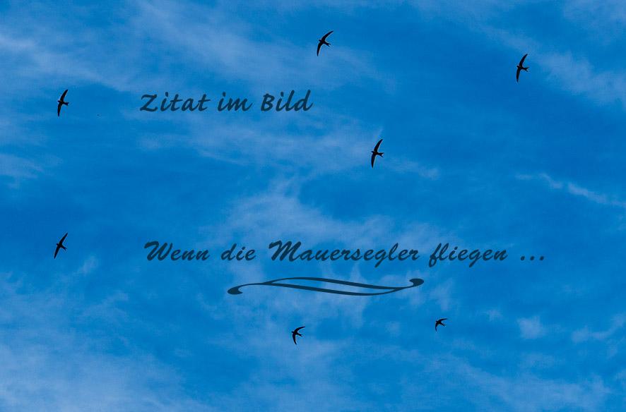 ZiB mit Vogel