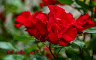 Nicht nur rote Rosen