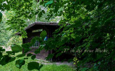 """""""T"""" ins Arboretum"""