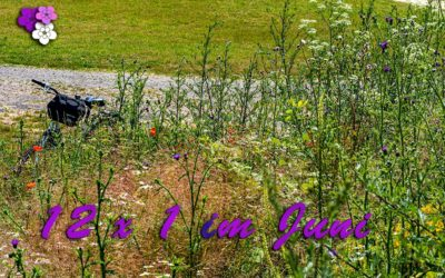 12 x 1 im Juni & Wiesenblumen