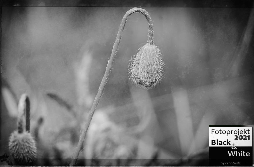 Black & White – Juni2021