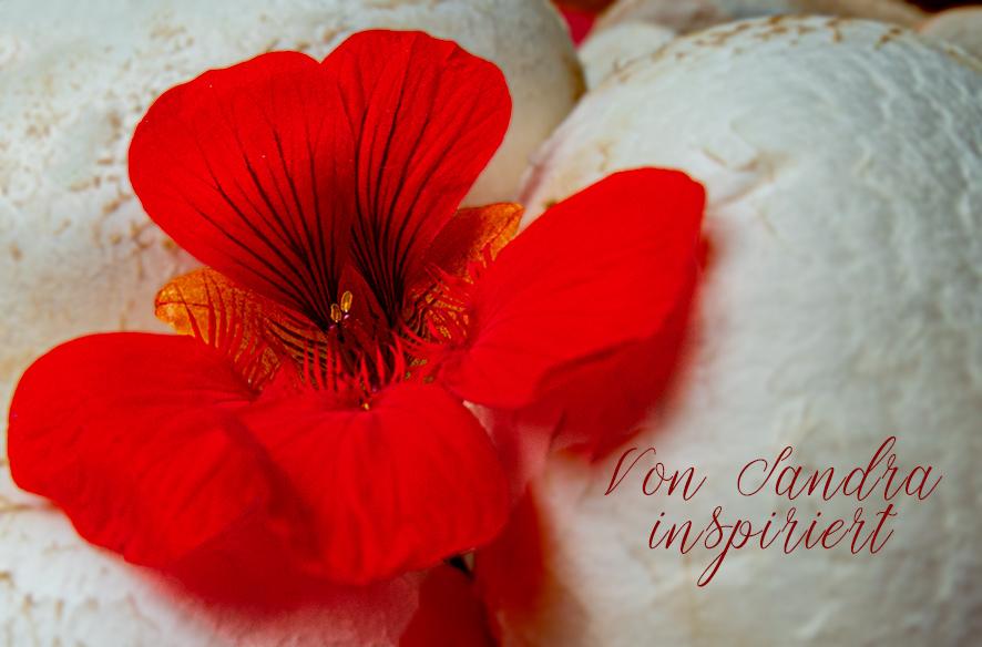 Gefüllte Champignons orientalisch