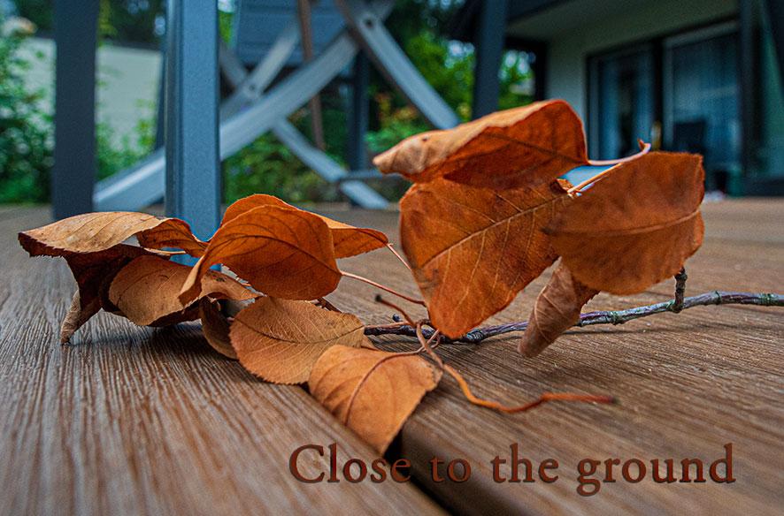 """15°C – Es herbstelt – """"Close to the ground"""""""