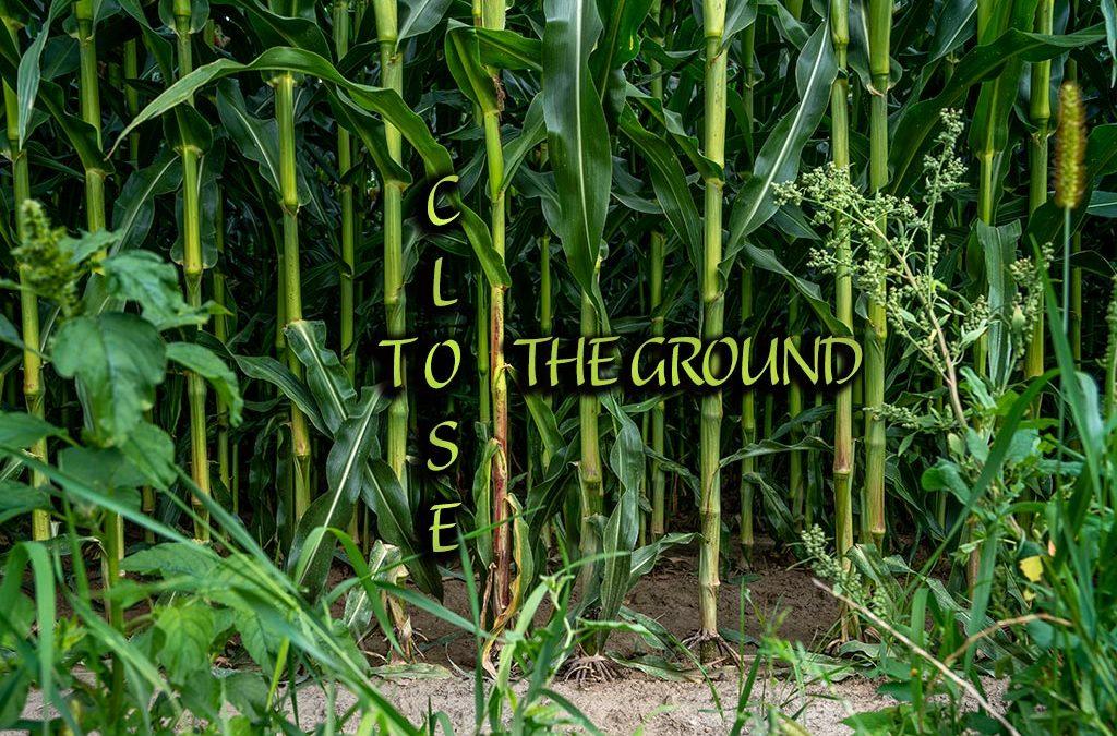Close to the Ground: Hobbit-Urwald