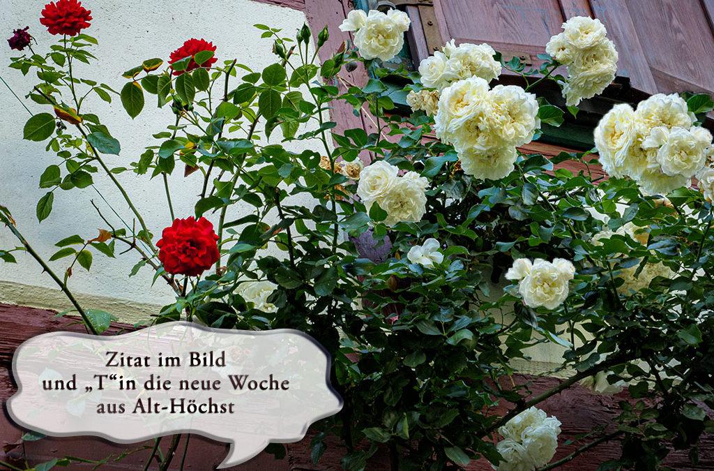 """Alt-Höchst mit ZiB & """"T"""""""