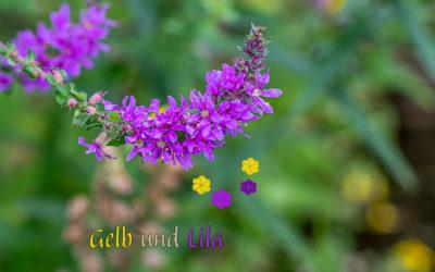 Gartenwonne – Gartenfrust