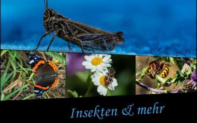 Insekten & … Beitrag  ;-)