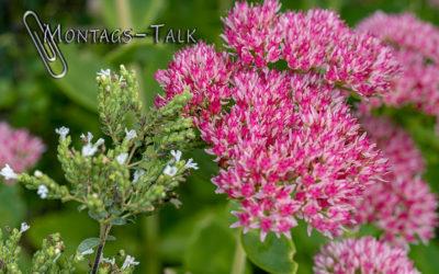 Montags-Talk #1