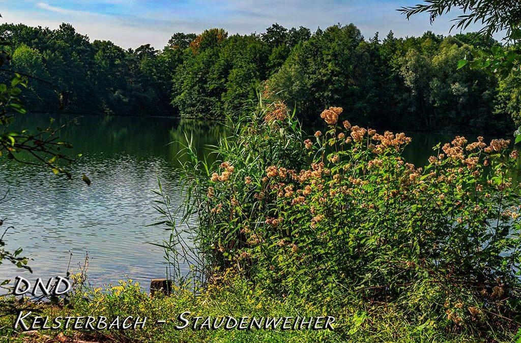 DND – Rund um den herbstlichen Staudenweiher