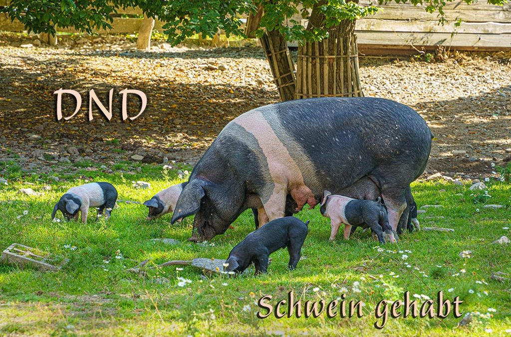 DND – Heute aus dem Hessenpark