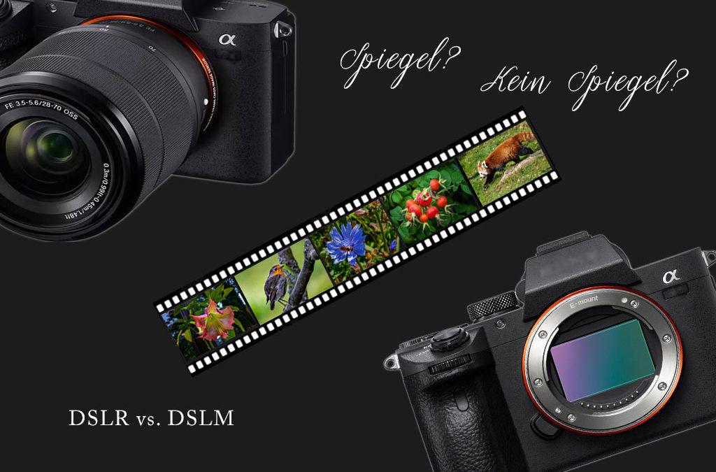 Kamerageplauder: DSLR vs. DSLM