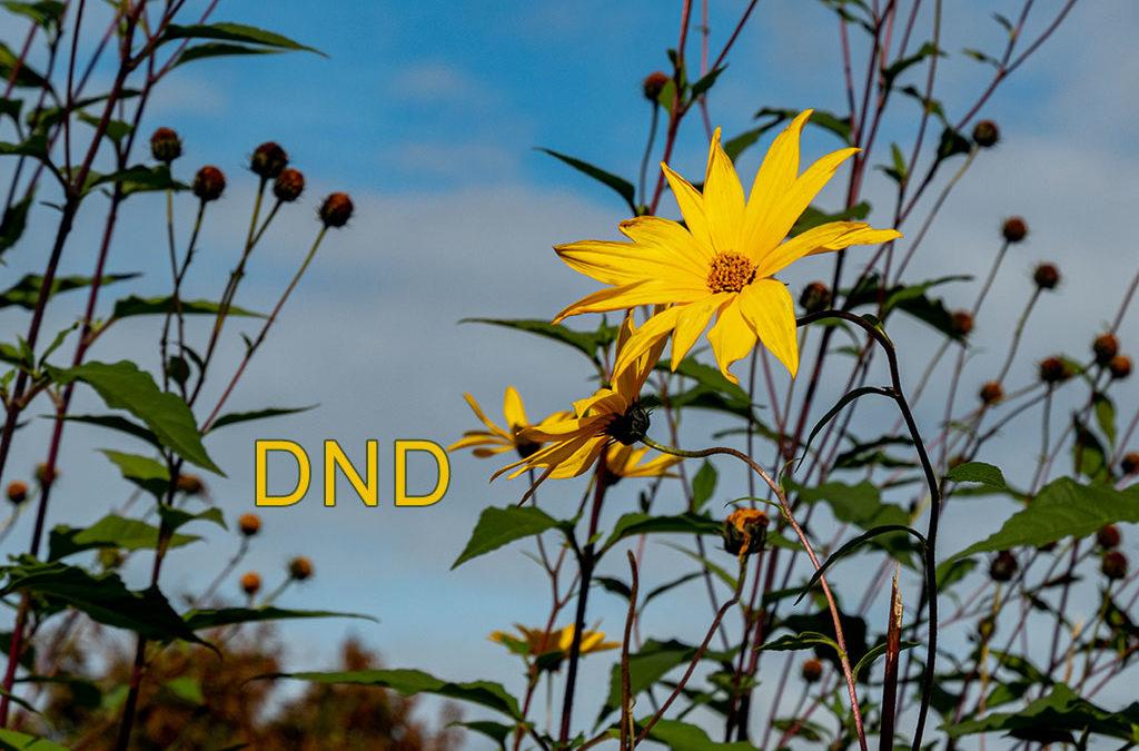 DND – planlos