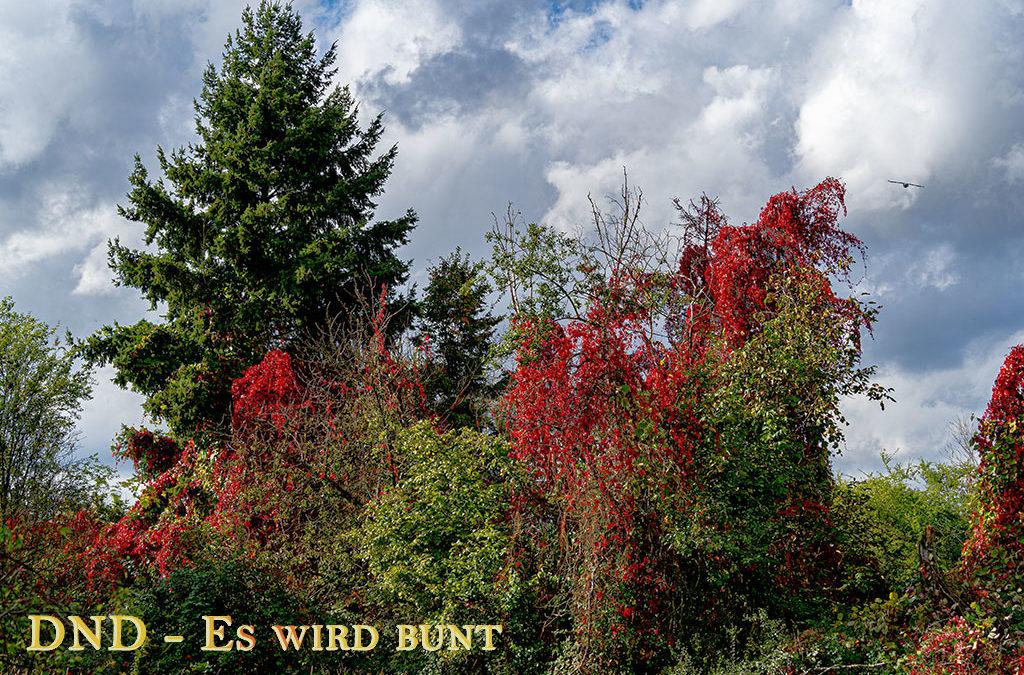 DND – Herbstspaziergang Schwanheimer Düne
