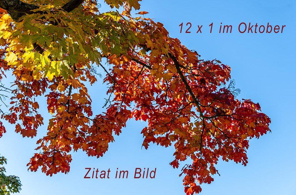 Herbstliche Farbenpracht (ZiB & 12 x 1)